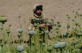 Image result for troops guarding poppy fields