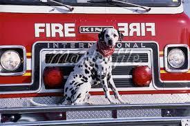Ο σκύλος Δαλματίας πως χρησιμοποιείται στην Αμερική...