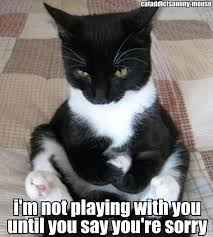 Sulky cat. | Cats | Pinterest | Cat, Plays and Haha via Relatably.com