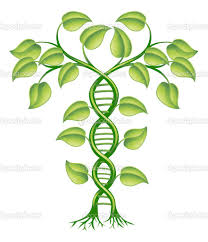 Family Tree, Family History, Family, Ancestors, Genealogy, DNA results, DNA proof, DNA