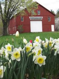 Image result for barns from spring