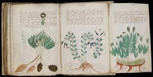 Bildergebnis für codex seraphinianus pdf
