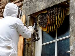 Image result for bees around the home have become extremely dangerous and you have no choice but to kill them