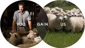 Terminal programme | <b>Sheep</b> | Focus Genetics