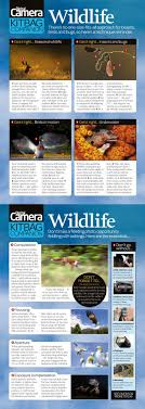 best ideas about wildlife conservation jobs wildlife photography cheat sheet tips on composing exposing and how to shoot some