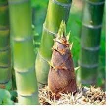 Image result for Filosofi Pohon Bambu