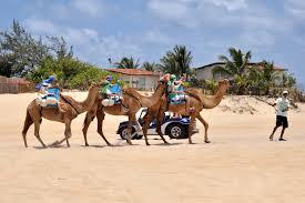 Resultado de imagem para camelo na churrasqueira