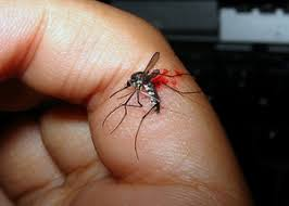 Image result for dead mosquito