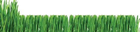 lawn care logo template anuvrat info logos for lawn care companies lawn xcyyxh com