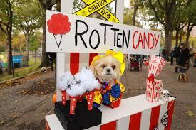 NYC pups in <b>cute</b> and <b>creative</b> costumes for annual <b>Halloween</b> Dog ...