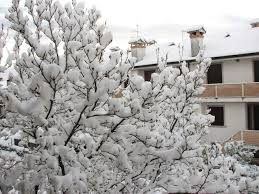 Risultati immagini per neve