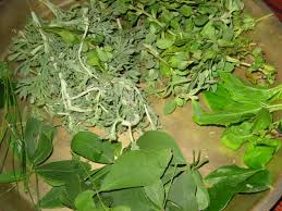 ganeksvinayaka-chavithi-health-leaves-healthy-food-fit-a