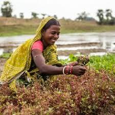 images about undp  women    s empowerment on pinterest    women adapting  undp india  enabling communities  puri district  undp women s  australian agency  weather check  events check  women s empowerment