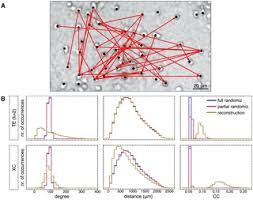 Model-Free Reconstruction of Excitatory Neuronal Connectivity from ...