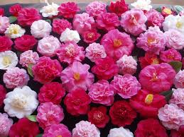 ازهار الربيع images?q=tbn:ANd9GcT