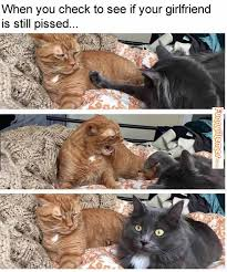FunnyMemes.com • Cat memes - Yeah She Is Still Pissed Off via Relatably.com