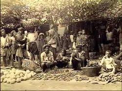 Sejarah Sistem Tanam Paksa (Cultuurstelsel)Penjajahan Belanda di Indonesia