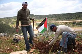 Image result for Palestinian farmers PHOTO