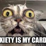 Crazy Cat Meme Generator - Imgflip via Relatably.com