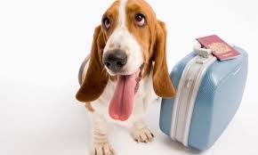 Resultado de imagen de volar con tu perro
