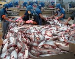 Image result for catfish processing