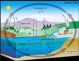 carbon and nitrogen cycle essay   research paper academic writing        carbon and nitrogen cycle essay