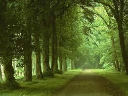 """Résultat de recherche d'images pour """"Nature forêt"""""""