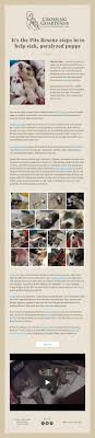 best images about animal advocacy chihuahuas it s the pits rescue steps in to help sick paralyzed puppy