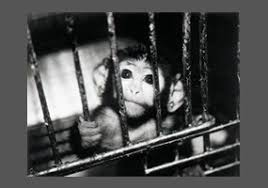 should animal testing be banned  debateorg should animal testing be banned