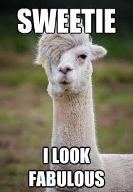 sweetie i look fabulous - Hipster Llama - quickmeme via Relatably.com