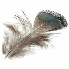 <b>Pheasant</b> Craft <b>Feathers</b> for sale | eBay