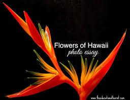 flowers of hawaii photo essay the educational tourist