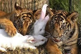 حيوانات زيتية ررووعة