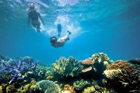 great barrier reef s great natural wonder