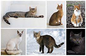 <b>Кошка</b> — Википедия