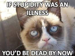 New-Grumpy-Cat-Meme-05.jpg via Relatably.com