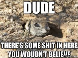 MEME-Ground-Squirrel.jpg via Relatably.com