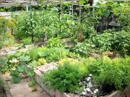 Small Picture Backyard Garden With Raised Bed Medicinal Plants Growing