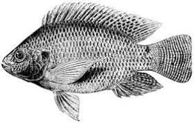 FAO Fisheries & Aquaculture - Programa de información de ...