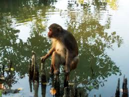 Sundarbans West Wildlife Sanctuary