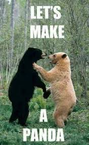 Funny Bears memes and pics on Pinterest | Bear Meme, Funny Bears ... via Relatably.com