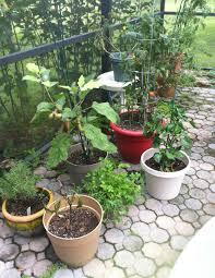 patio container