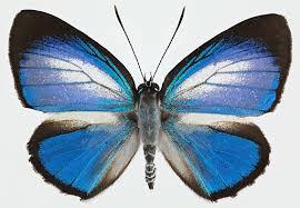 <b>Butterflies</b> — Google Arts & Culture
