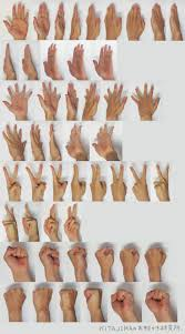 best images about anatomy studies cartoon human hands references