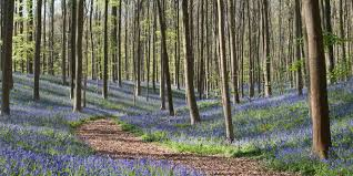 of the best woodland walks int he uk