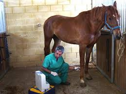 Resultado de imagen de veterinario
