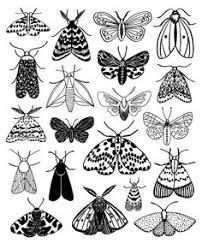 Эскизы <b>насекомые</b>: лучшие изображения (91) в 2019 г ...
