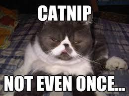 Catnip Not even once... - Misc - quickmeme via Relatably.com