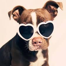 <b>Heart</b>-<b>Shaped Sunglasses</b> That Will Catch Your Eye This Summer ...