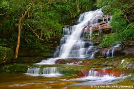 Image result for water falling in a rainforest